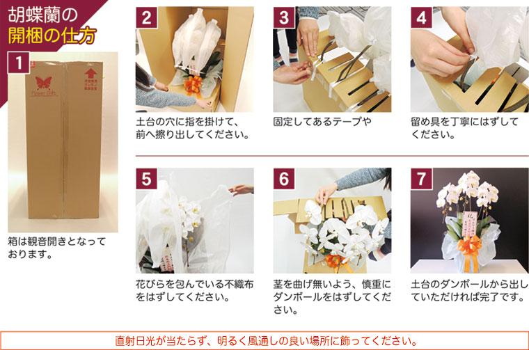 胡蝶蘭の開梱の仕方